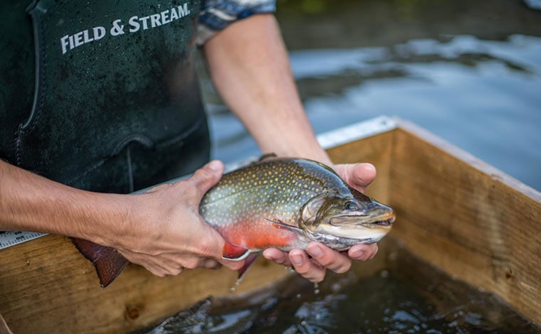 Big-Brown-Brook-Trout-boy-with-trout