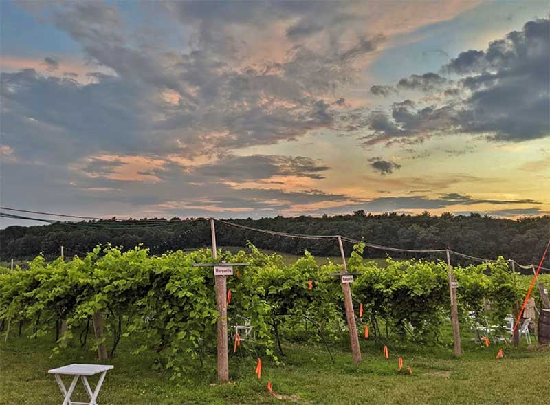the vineyard and the sky