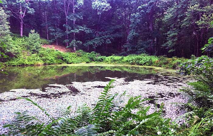 Cornelia-&-Florence-Bridge-Nature-Preserve-cornelia-pond