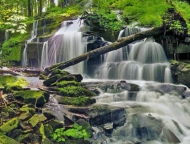 waterfall and trees in forest