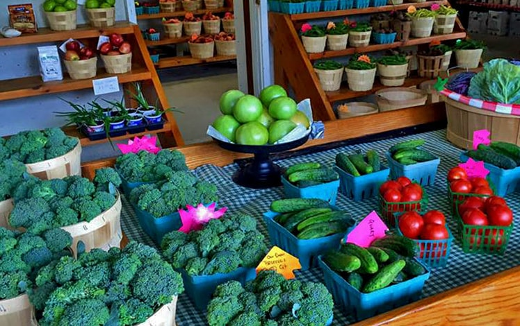 fresh farm grown broccoli and cucumbers