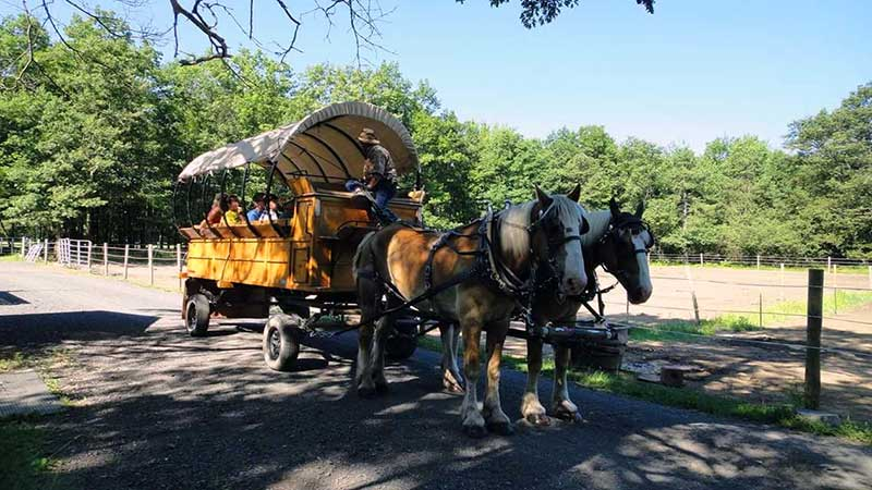 Mountain-Creek-Riding-Stable-Horse-drawn-Wagon-in-spring