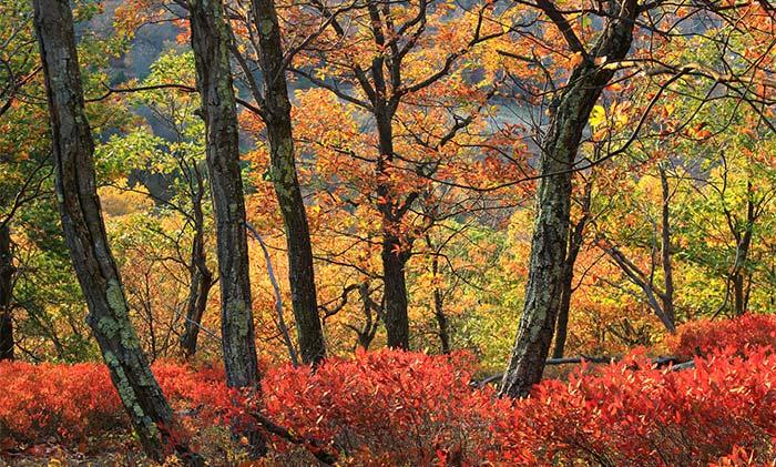 Mt.-Wisner-at-Gravel-Preserve-in-the-fall