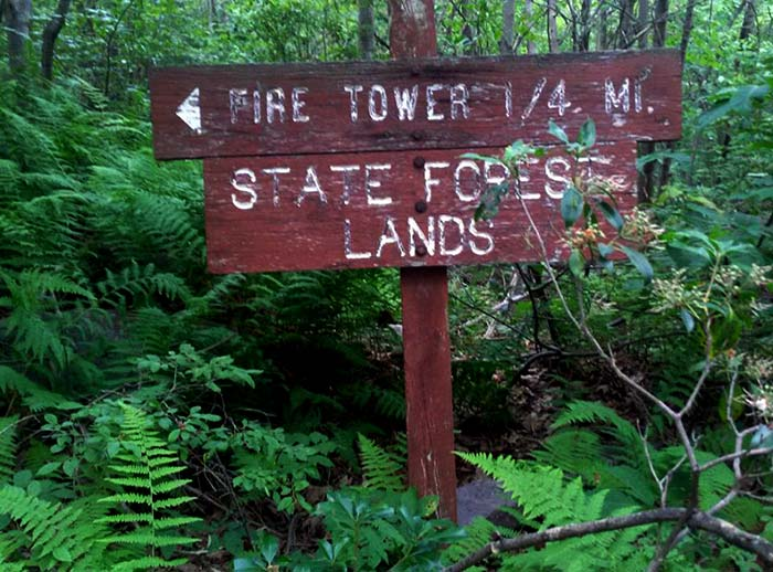 Peaceful-Woodlands-Family-Campground-state-forest-sign