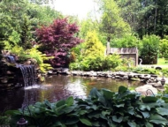 Three-Pines-Campground-koi-pond-and-trees