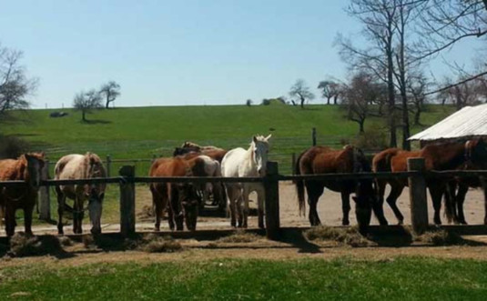 Triple-W-Riding-Stables-horses-feeding