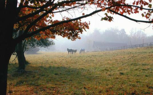 daisy-field-farms-riding-stables