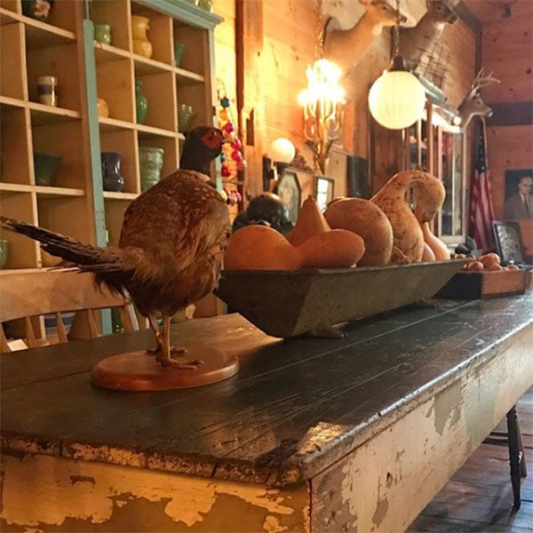 dancing-dog-antiques-interior-barn-stuffed-pheasant-and-gourds