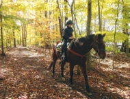 deer-path-riding-stables child riding horse on trail