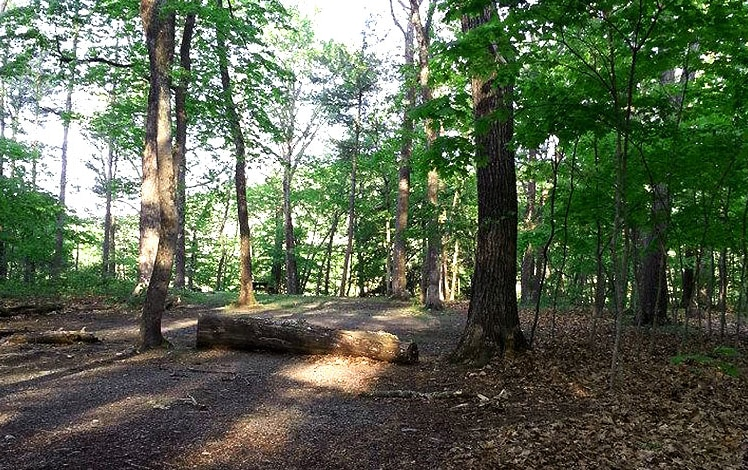 dingmans-campground-site level wooded in forest
