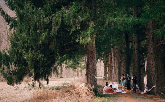 edge-of-the-woods-roadside-scene