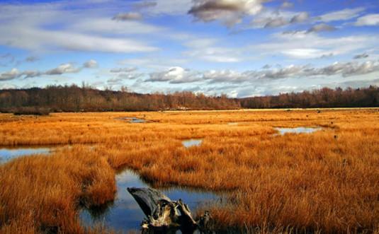 gouldsboro-state-park-wetlands-field