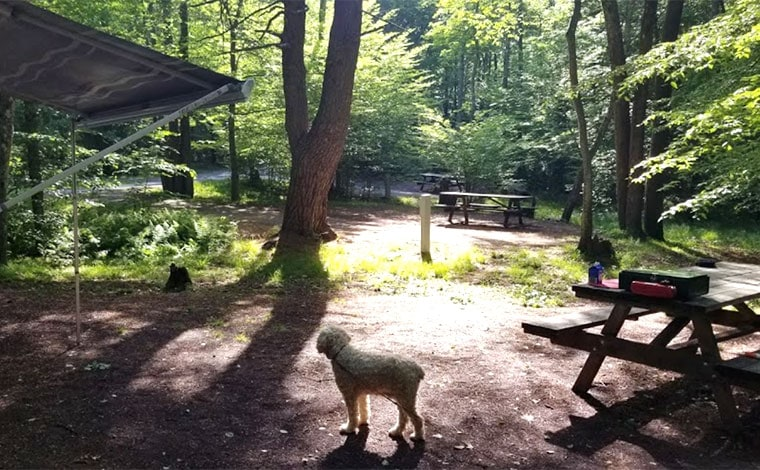hickory-run-state-park-campground-camp-site-with-dog