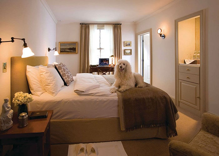 hotel-fauchere-room-with-poodle