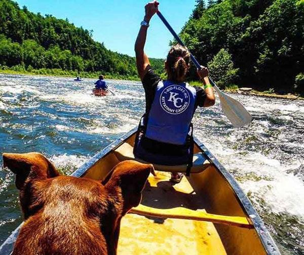 kittatinny-canoes-on-river-with-dog