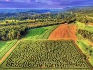 mazezilla overeview of the maze from overhead