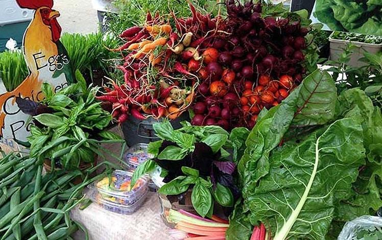 monroe-farmers-market-fresh-basil-heirloom-carrots
