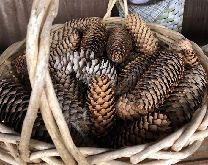mountainhome antiquest basket of pine cones