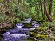 cranberry creek