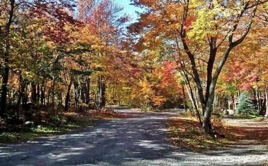 trees along road