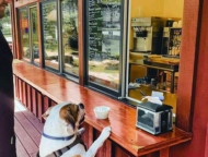 south-street-ice-cream-cafe-guy-with-his-dog-at-the-counter