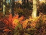 thomas-darling-preserve-cinnamon-ferns