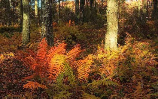 thomas-darling-preserve-cinnamon-ferns
