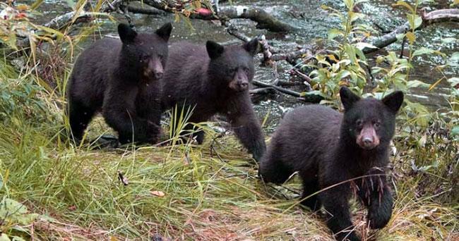 tobyhanna-state-park-camping-bear-cubs-picnic