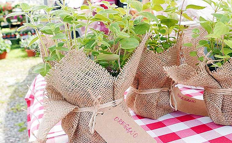 wayne-county-farmers-market-potted-herbs-in-burlap-bags